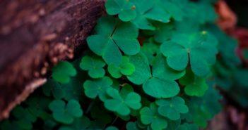 Magia irlandzkiej fantastyki